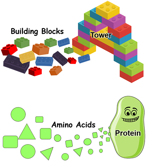 Figure 2 - Proteins are made of amino acids.