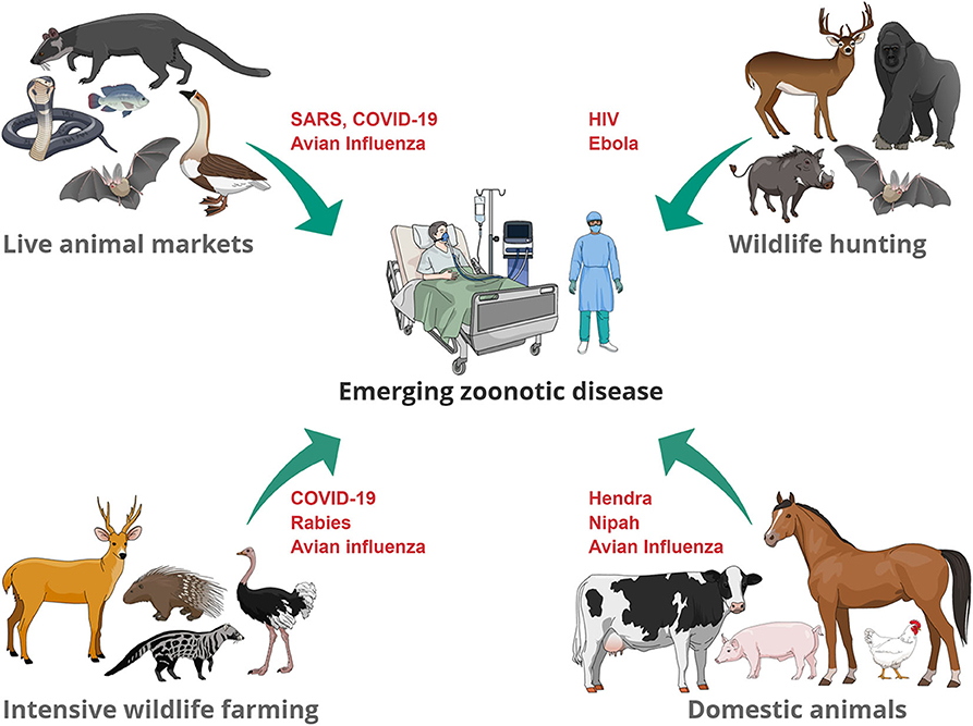 Frontiers Emerging Zoonotic Diseases Should We Rethink The Animal Human Interface Veterinary Science 128 a penguin lives on the ice. frontiers emerging zoonotic diseases