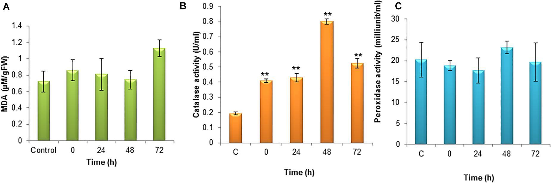 peroxid a pinwormok ellen