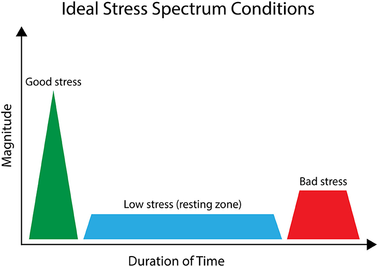 Figure 2 - To stay healthy, we must try to balance the stress response.