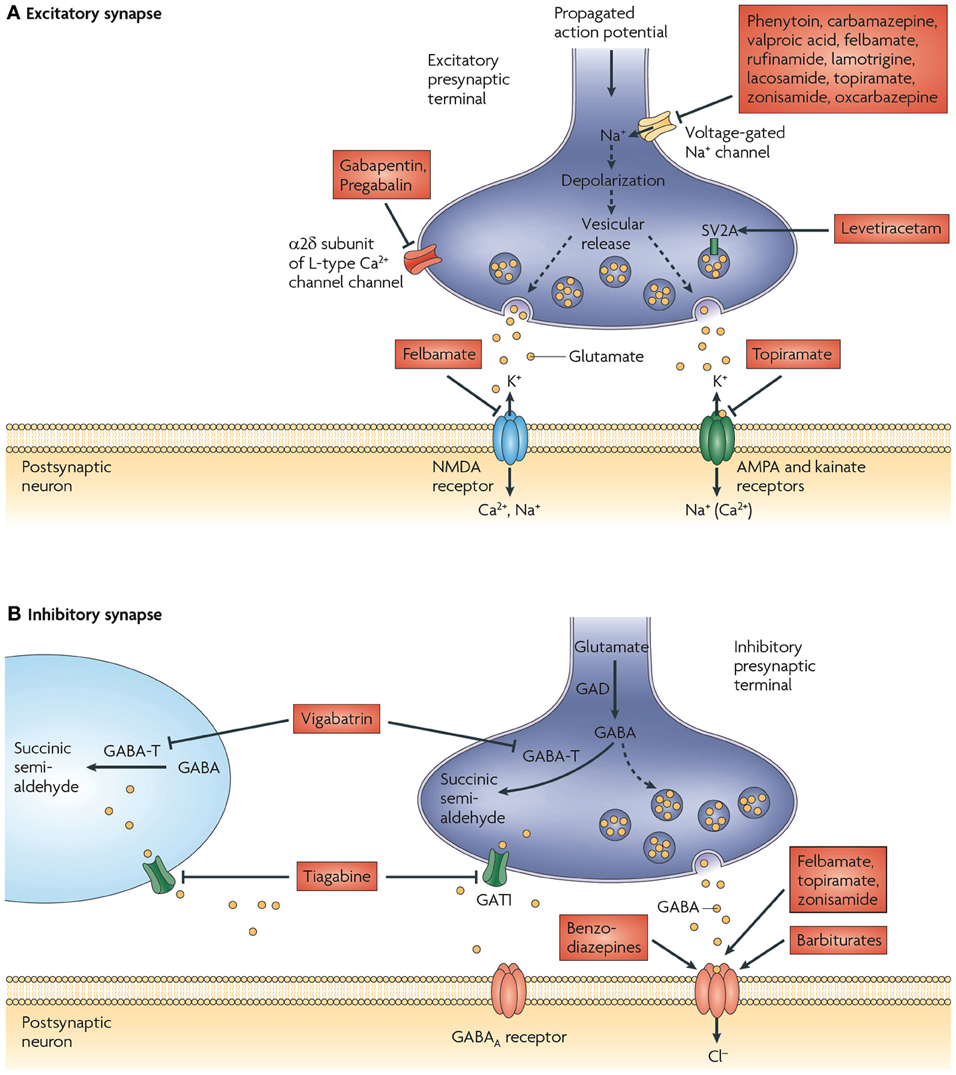 Frontiers Are Vesicular Neurotransmitter Transporters
