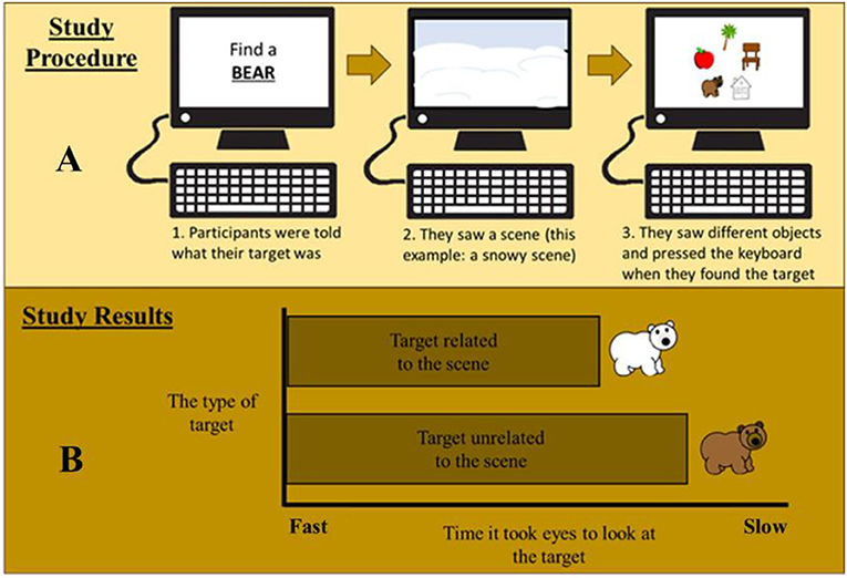 """Figure 3 - (A) In our study, participants were first given a search category, in this case """"bear."""""""