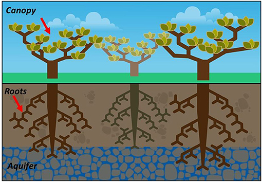 """Figure 1 - The Cerrado forest is also called the """"upside-down"""" forest."""