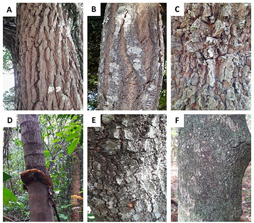 Figure 2 - Examples of bark types from the Cerrado.