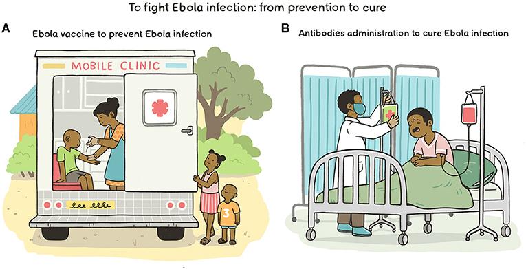 Figure 3 - Fighting Ebola virus infection.