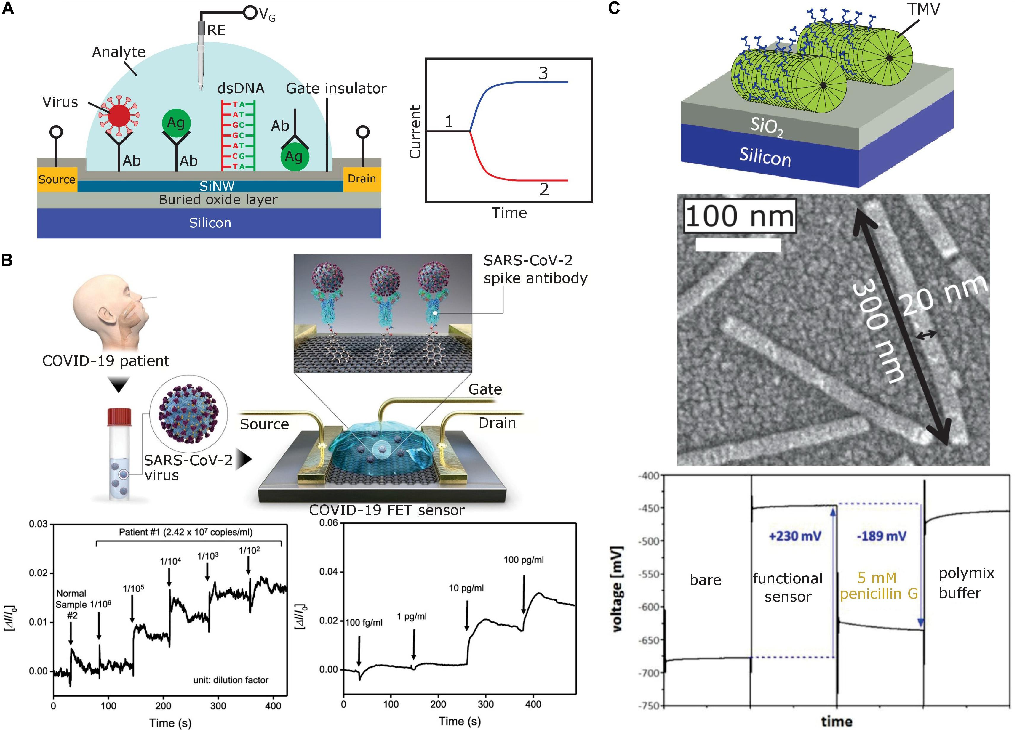 Frontiers   Field Effect Sensors for Virus Detection From Ebola ...