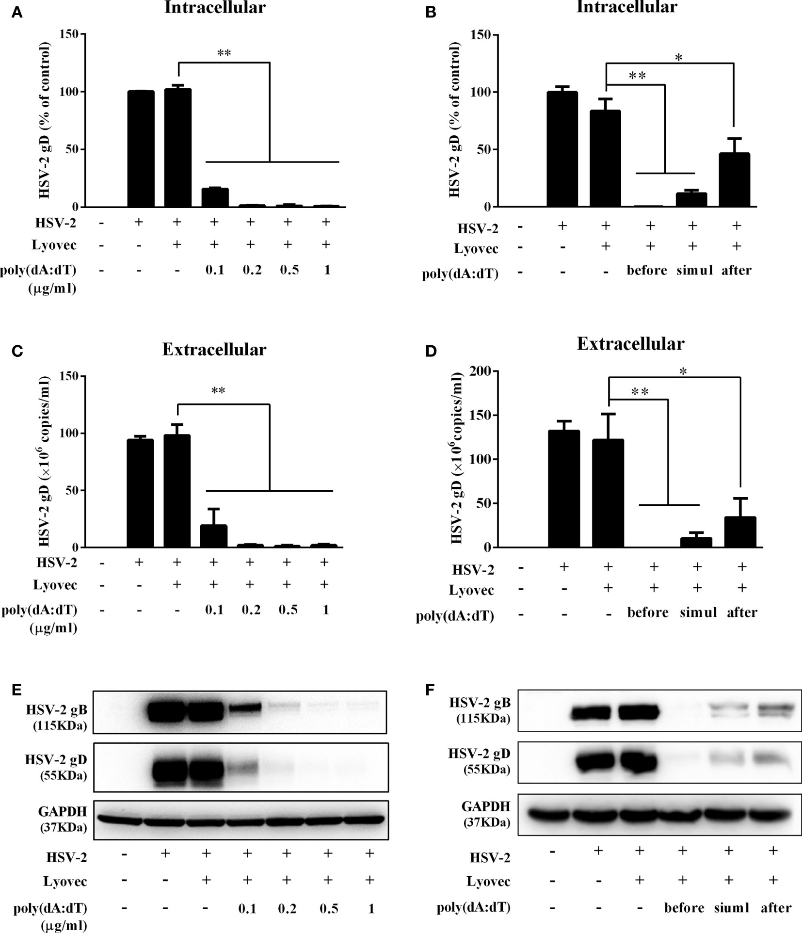 Casein Kinase II Controls TBK1/IRF3 Activation in IFN