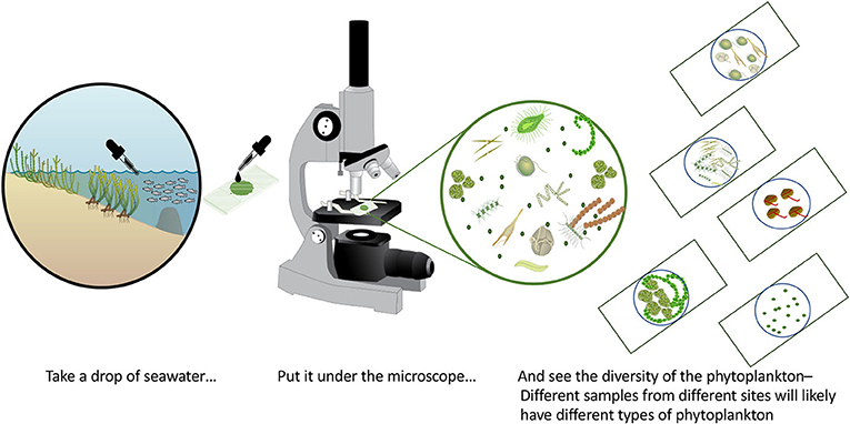 Figure 1 - Every drop of seawater has thousands of microscopic plankton.