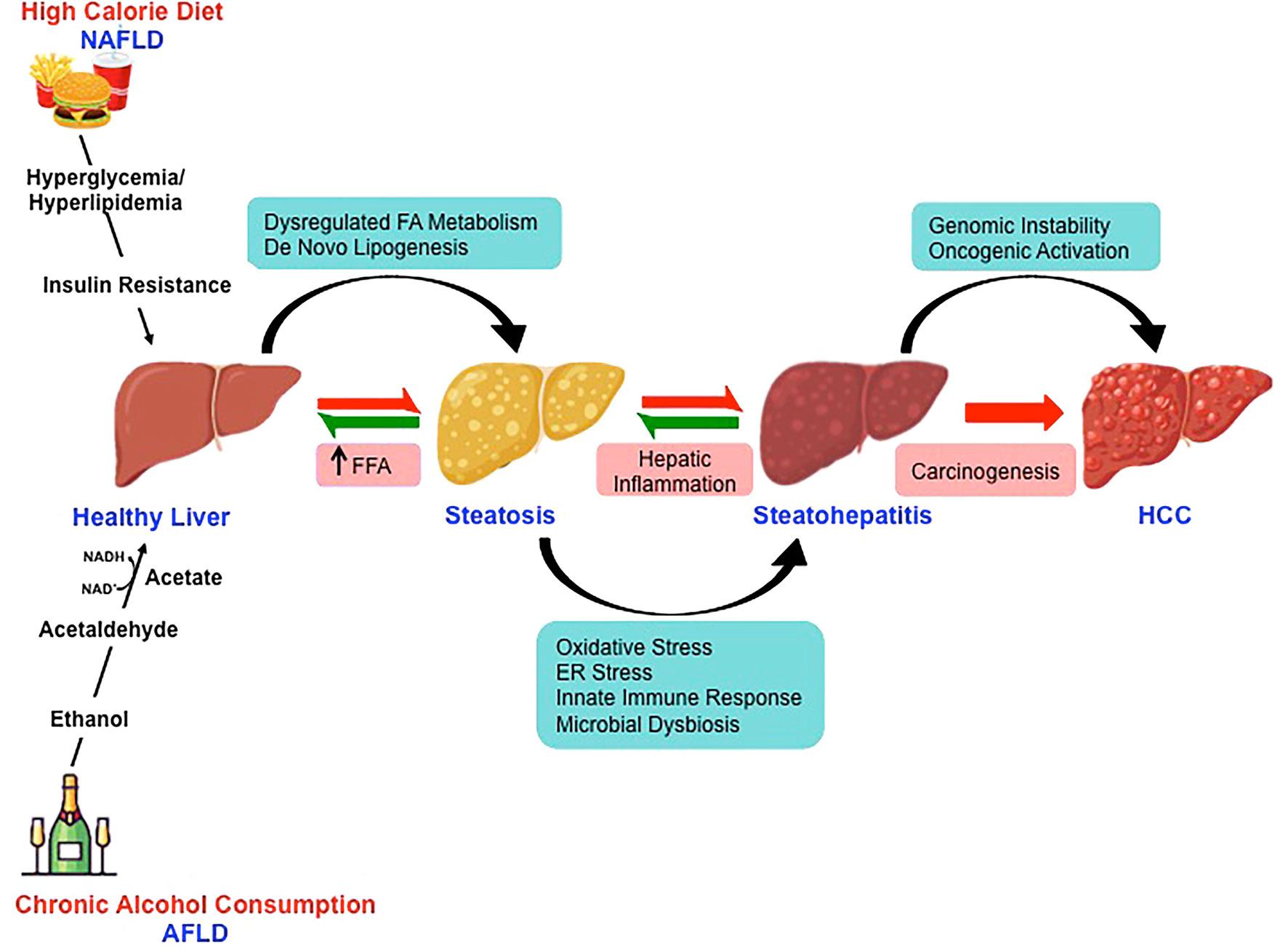 Hepatic cancer pathophysiology, Precision Molecular Pathology of Liver Cancer