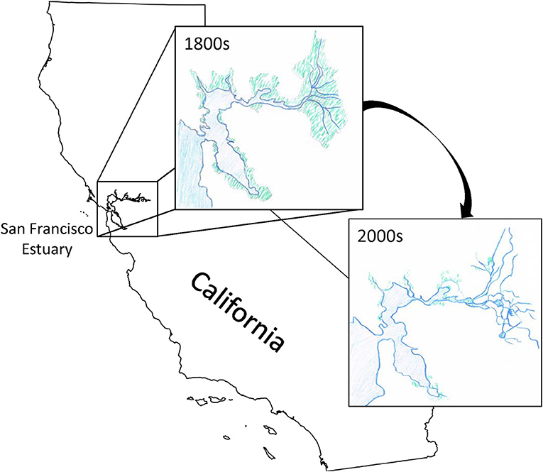 Figure 2 - Most of the tidal wetlands in the San Francisco Estuary have been destroyed or changed to use for other purposes, such as building or farming.