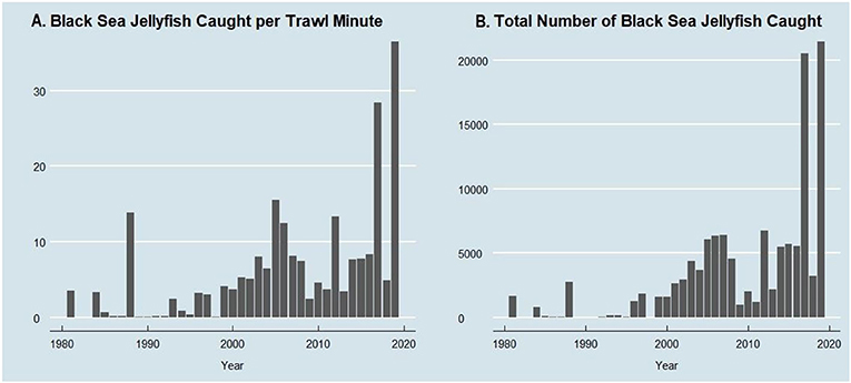 Figure 2 - (A) The number of Black Sea jellyfish caught per minute of trawling, in Suisun marsh.