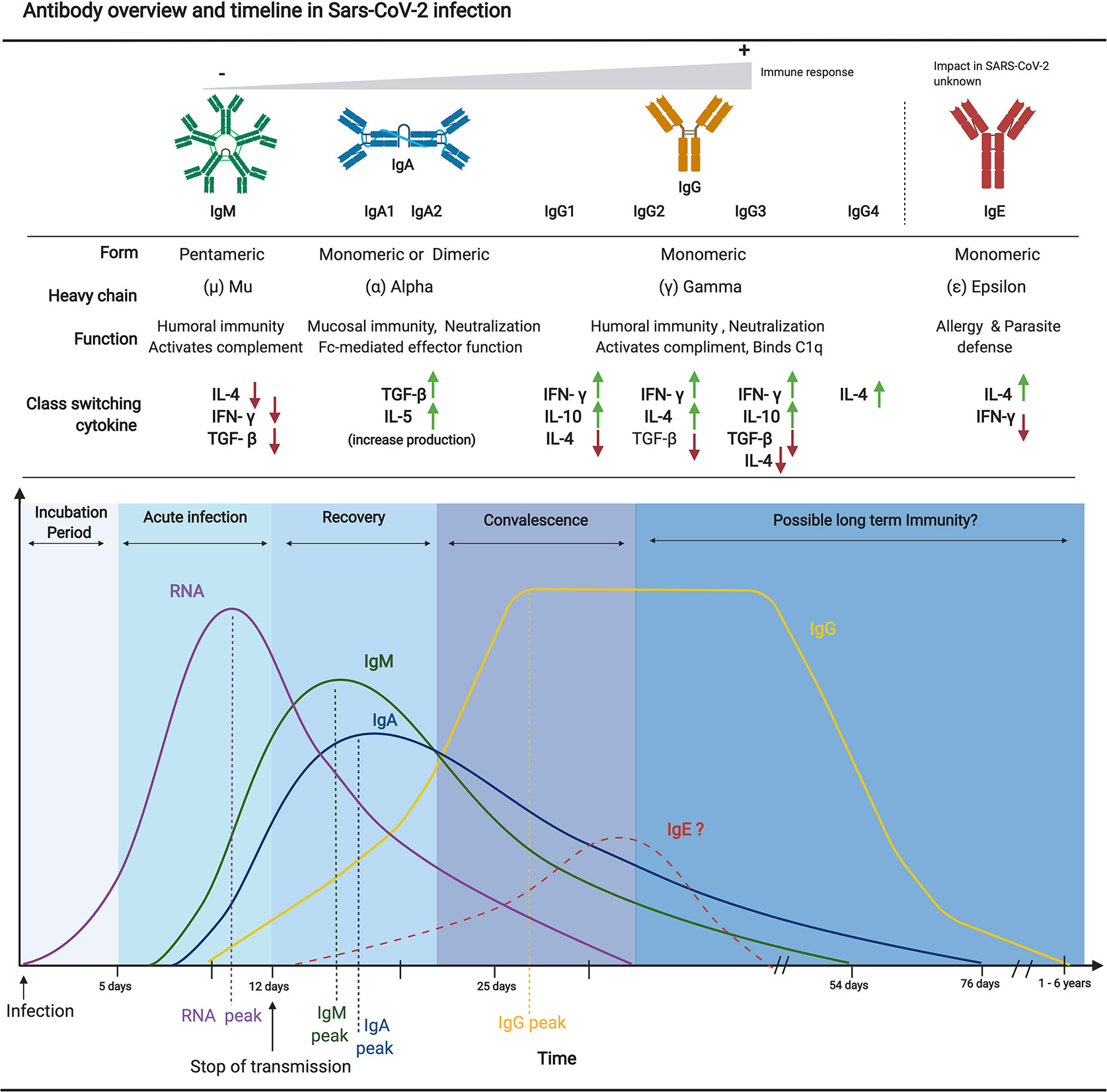 Frontiers Humoral Responses And Serological Assays In Sars Cov 2 Infections Immunology