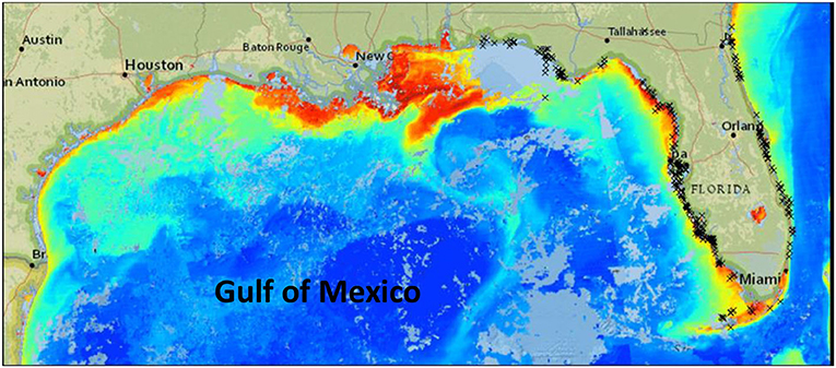 Figure 2 - CoastWatch satellite imagery allows scientists to map the presence of HABs formed by the dinoflagellate Karenia brevis in the Gulf of Mexico, along the southeast boarder of the United States.
