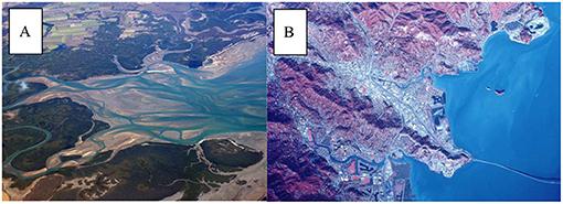 Figure 1 - (A) Aerial photograph of the Murry River Estuary, Australia.