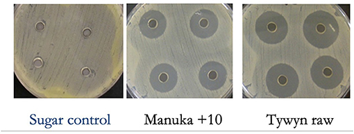 Figure 2 - We tested our antibacterial super honeys using an experiment called an agar well diffusion assay.