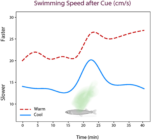 Figure 2 - Delta smelt in both cool (17°C) and warm (21°C) water increased their swimming speeds after the smell of an injured fish was added—represented in green.