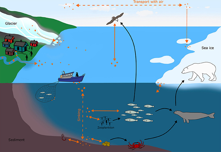 Figure 2 - Microplastics (orange dots) move through the environment and interact with animals in the Arctic Ocean.