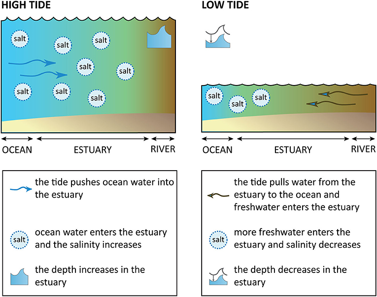 Figure 1 - Estuaries during high tide and low tide.