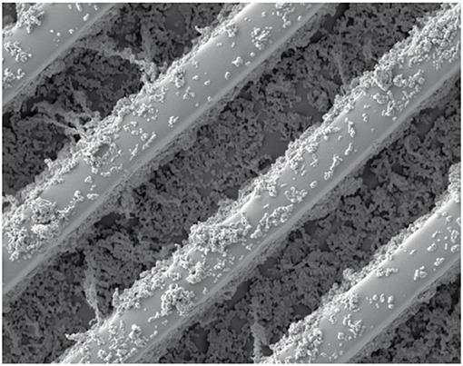 איור 4 - תמונה של משטח סופר-הידרופובי שצולמה בעזרת מיקרוסקופ אלקטרונים סורק.