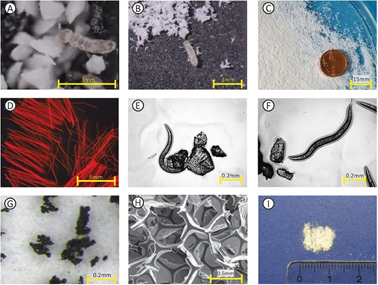 Figure 3 - Examples of microplastics.