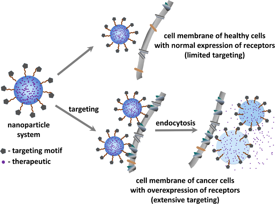 Frontiers Tumor Targeting Via Integrin Ligands Oncology