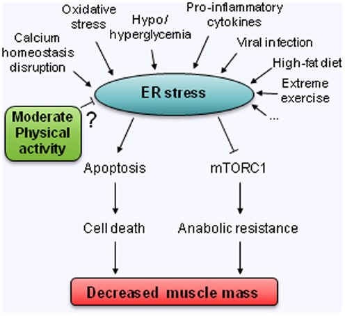 anabolic process in metabolism