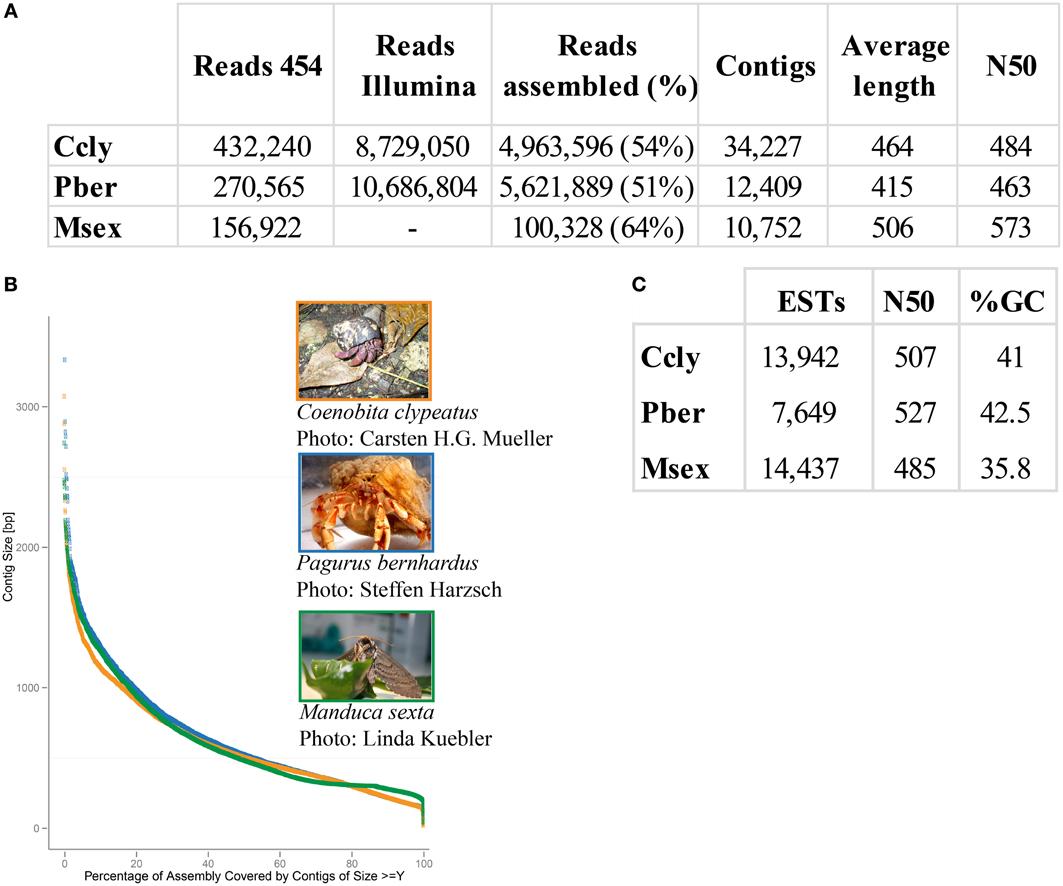 R Crabs Dataset Frontiers | The hermit...