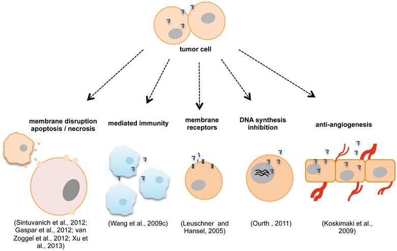 apoptosis mechanisms and anti cancer drugs Cancer and metastasis reviews 20: drug resistance in melanoma: mechanisms, apoptosis, and new potential potential mechanisms of drug resistance.