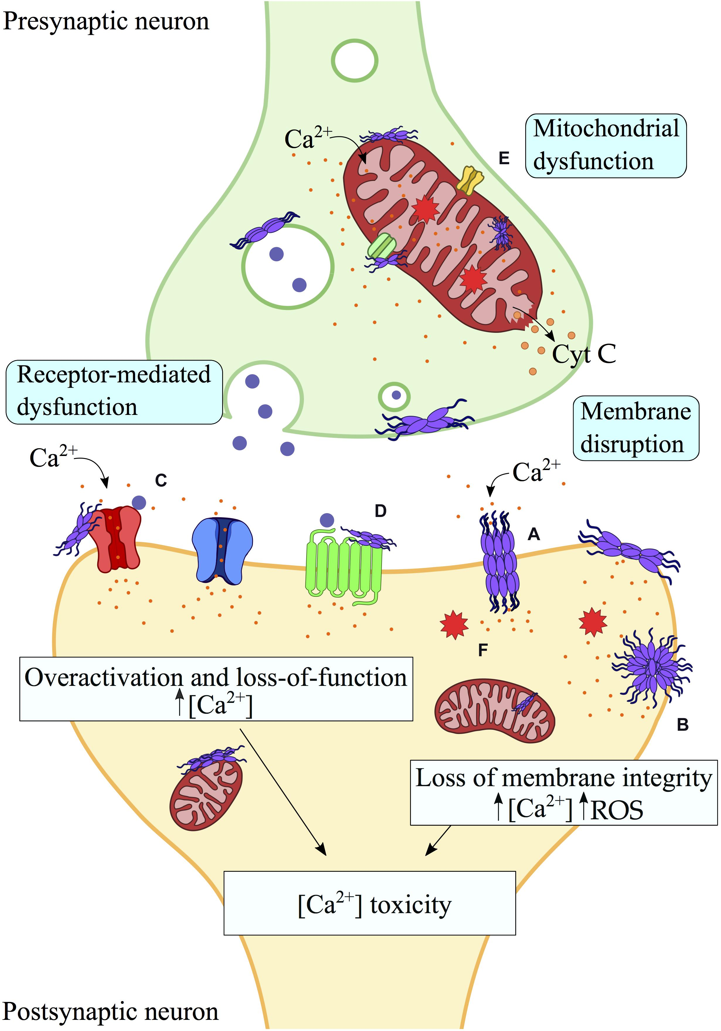 toxicity of protein)