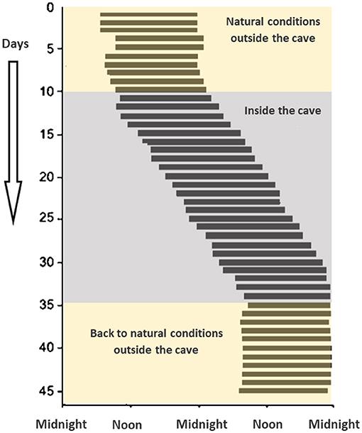 Figure 1 - Siffre's cave experiment.