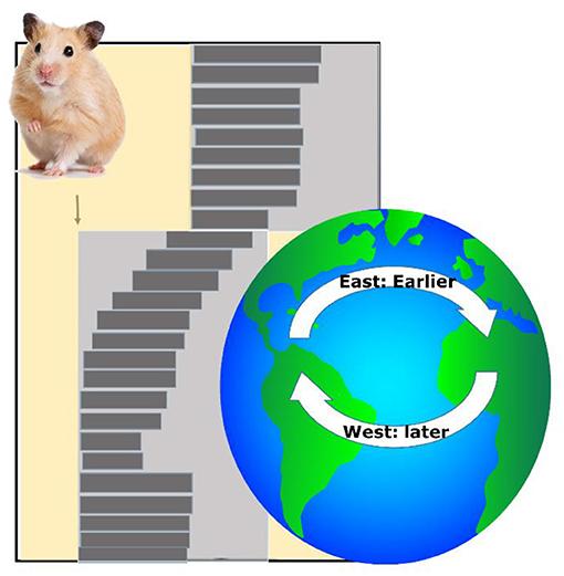 Figure 3 - Jet lag experiment.