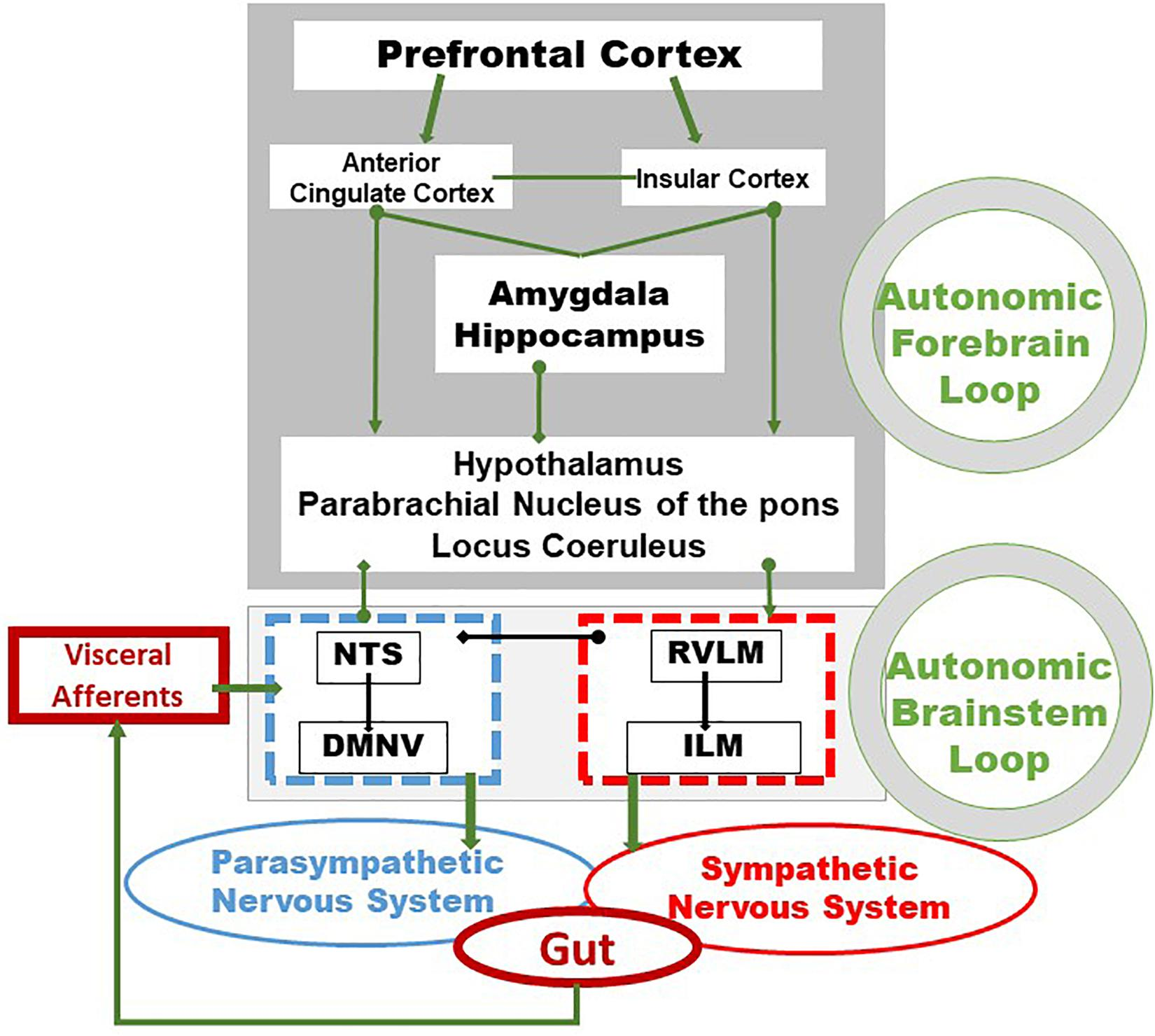 autonóm hipertónia magas vérnyomás proteinuria ödéma jellemző