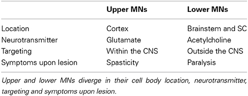 Lower and upper neuron lesions motor pdf