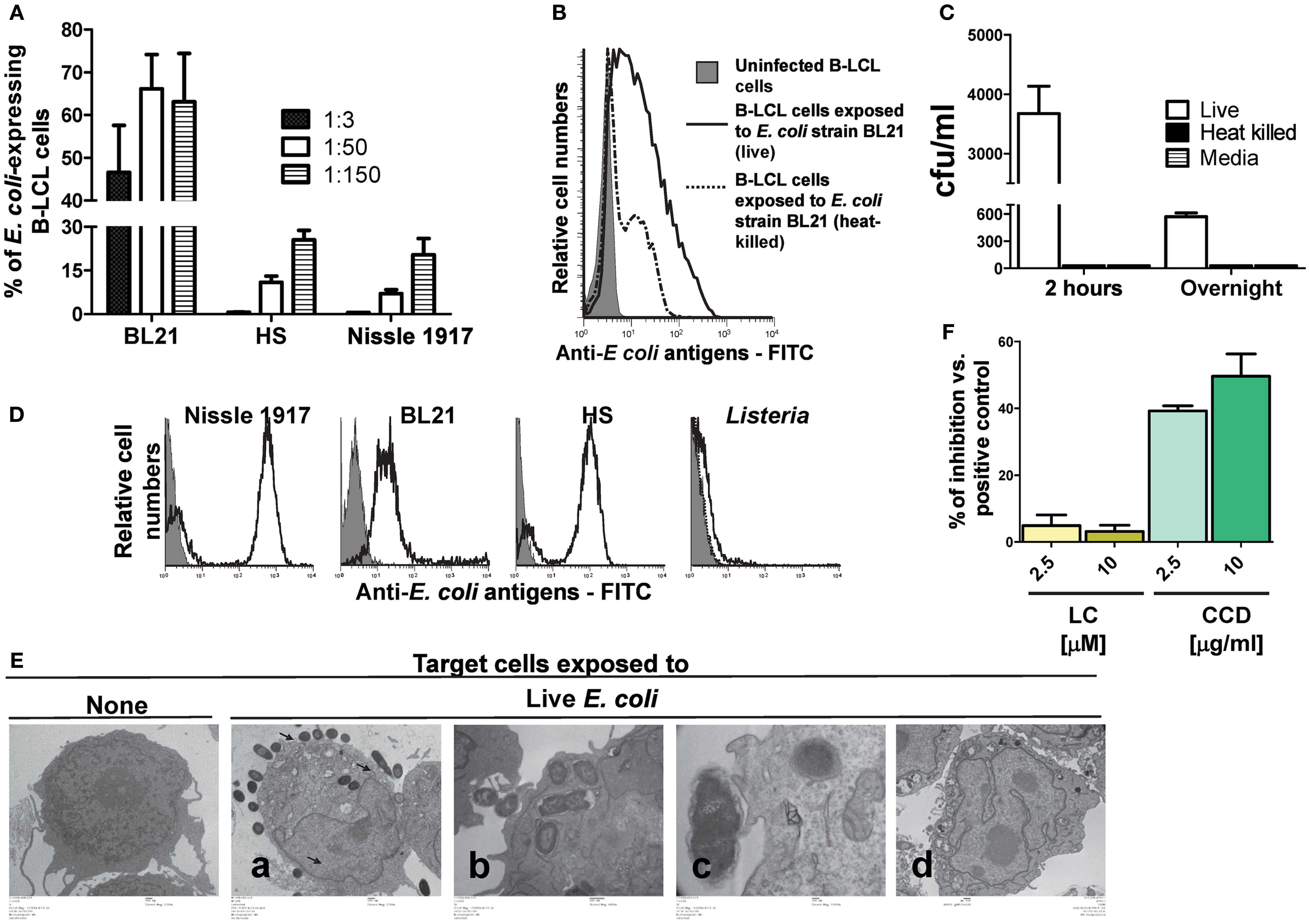 Frontiers | B Cells Modulate Mucosal Associated Invariant T Cell ...