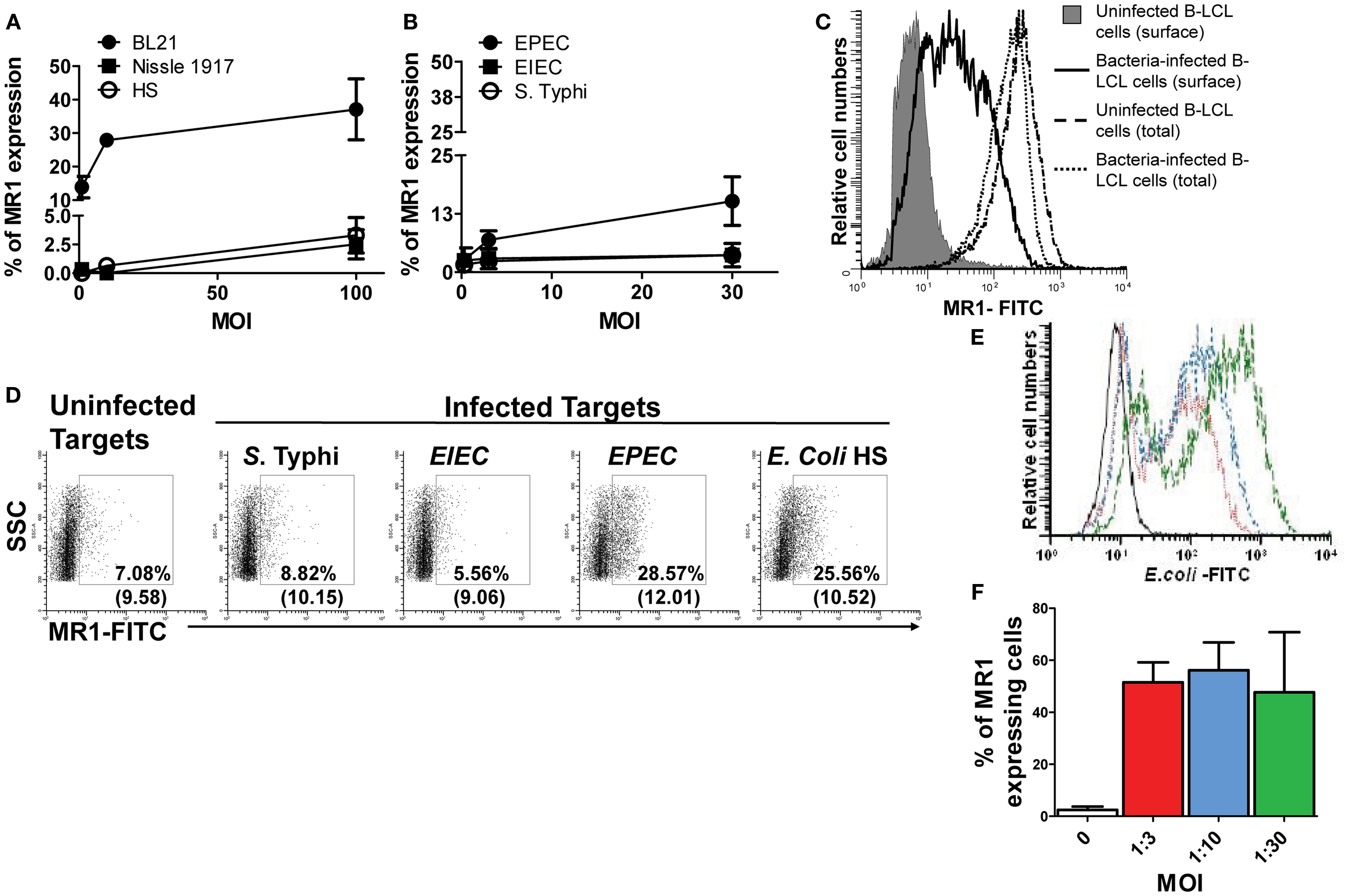 Frontiers   B Cells Modulate Mucosal Associated Invariant T Cell ...