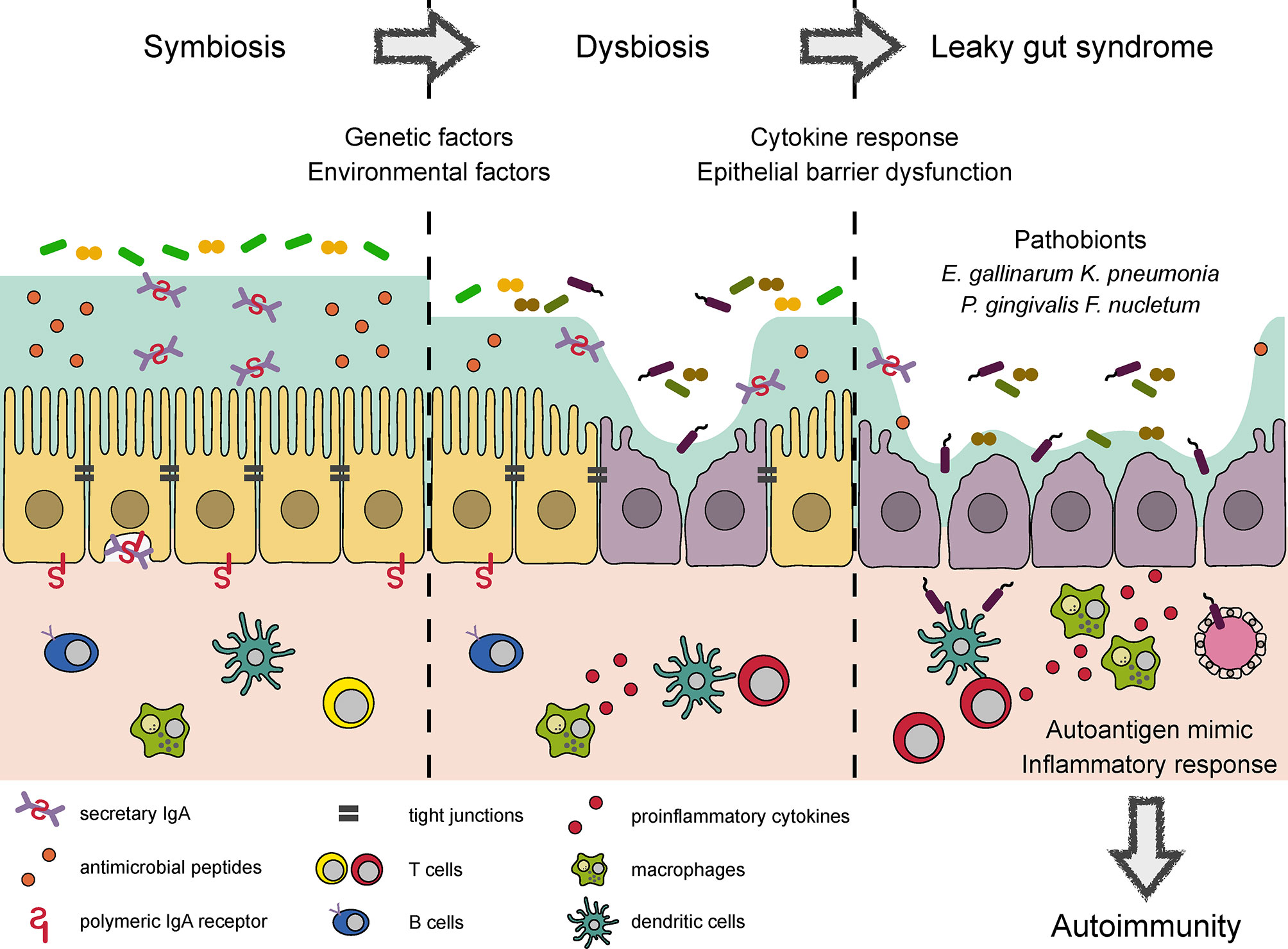 Dysbiosis healing