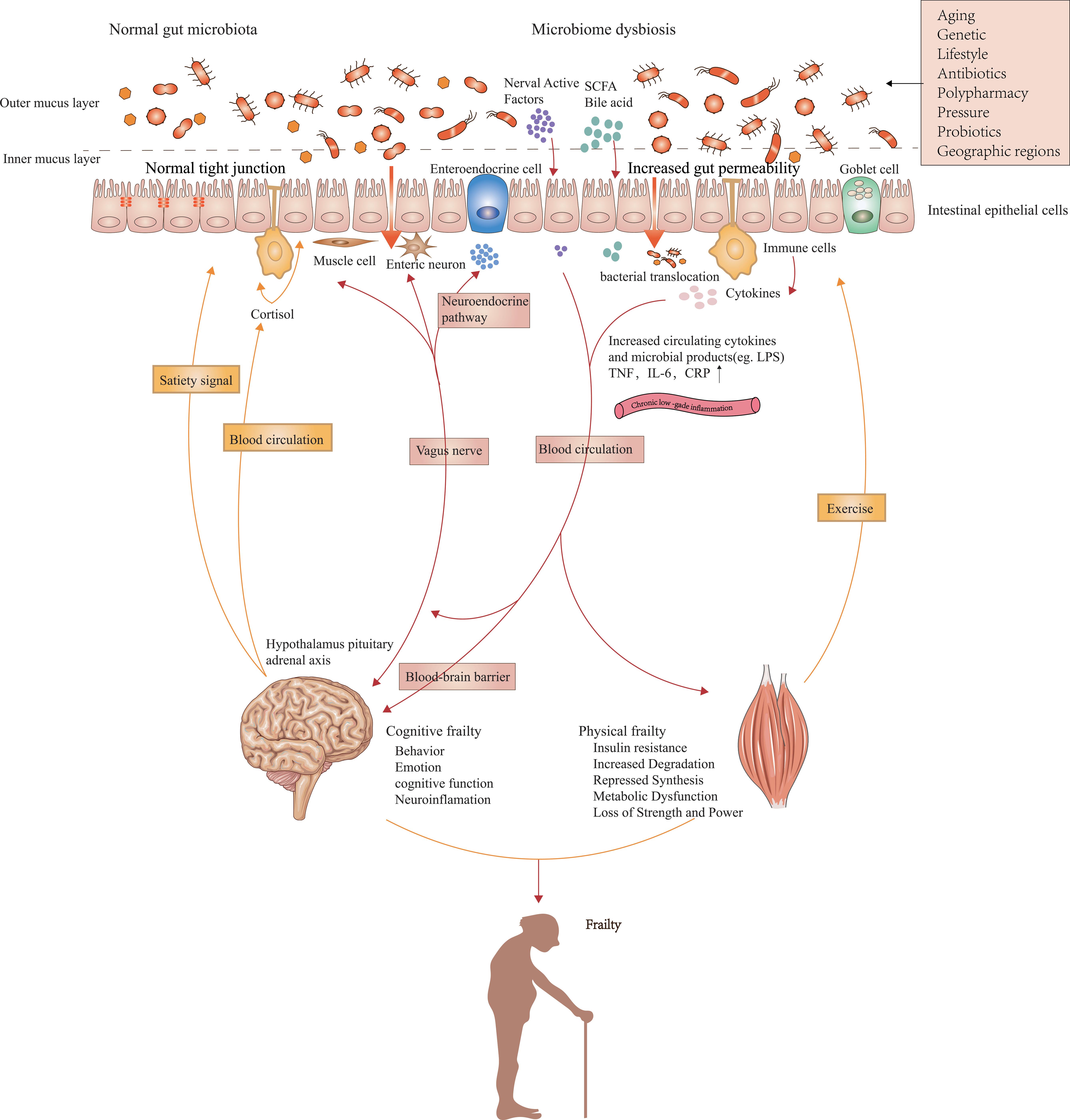 A transzkután vaginális idegstimuláció hatása a nyelőcsőfájdalom túlérzékenységének csökkentésére