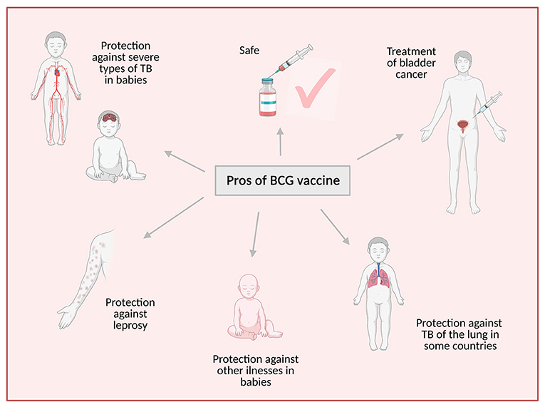 Figure 1 - The BCG vaccine has many advantages.