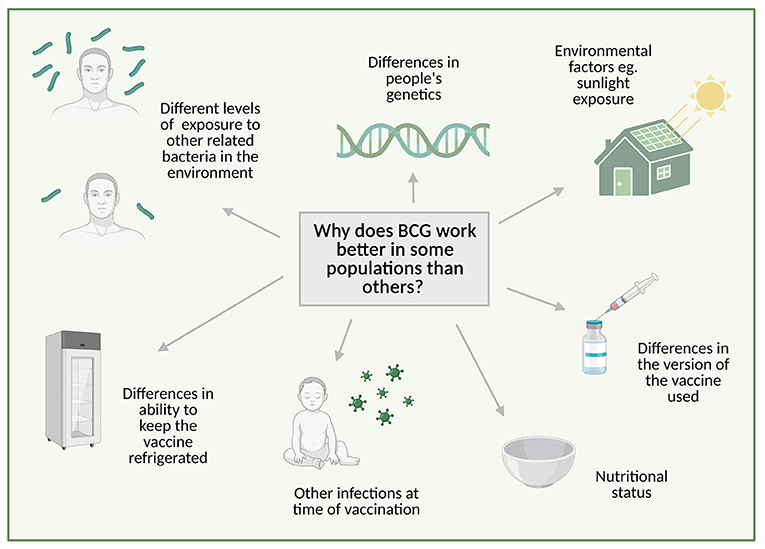 Figure 3 - Scientists are still not sure why the BCG vaccine works better in some populations than others, but there are several possible reasons.