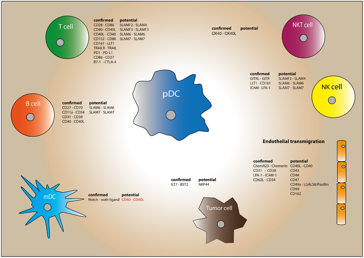 Dendritic cell maturation