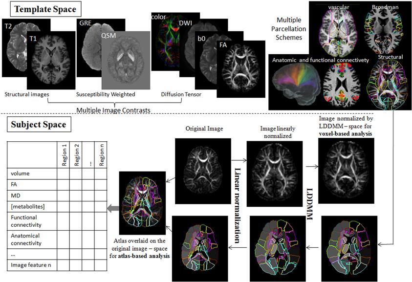 Frontiers | High-throughput neuro-imaging informatics | Frontiers in ...