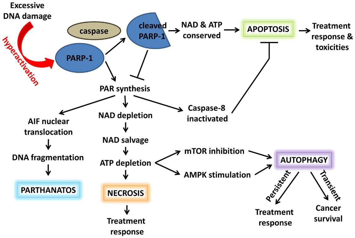 NAD+ an emerging framework for health and life extension — Part 1: The NAD World