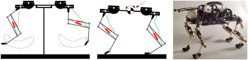 Frontiers   Kinematic primitives for walking and trotting gaits of a