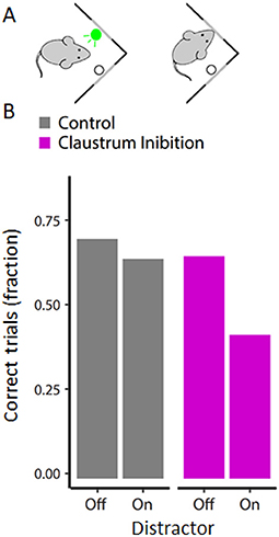 Figure 2 - Silencing the claustrum makes mice sensitive to distractions.