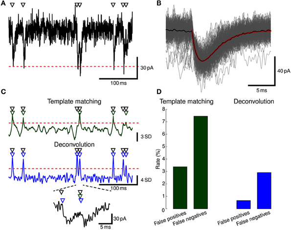 Frontiers | Stimfit: quantifying electrophysiological data with