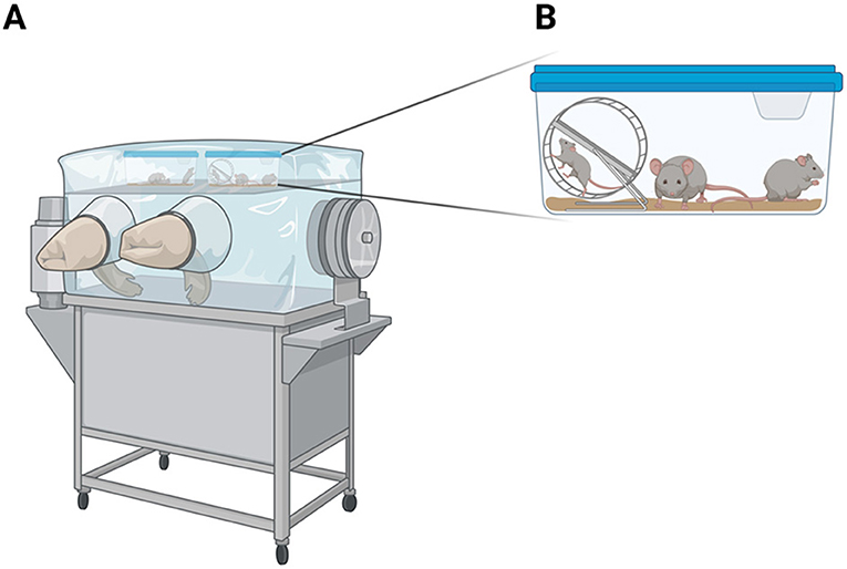 Figure 1 - Germ-free mice must be grown in an isolated environment, in which the air, food, and water are free of bacteria.