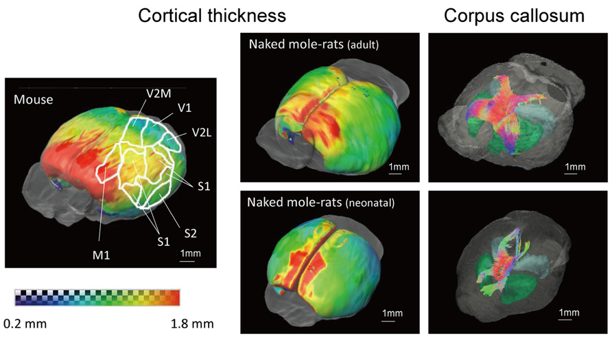 Frontiers Multidimensional Mri Ct Atlas Of The Naked