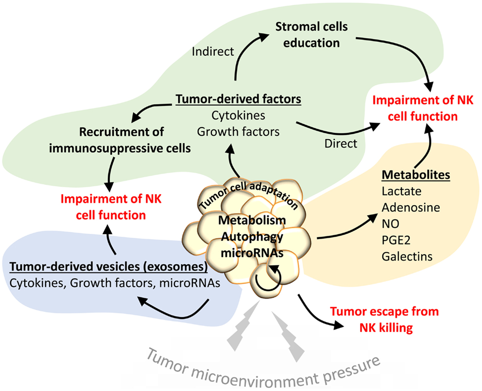 Nature Reviews Cancer Tumor Microenvironment