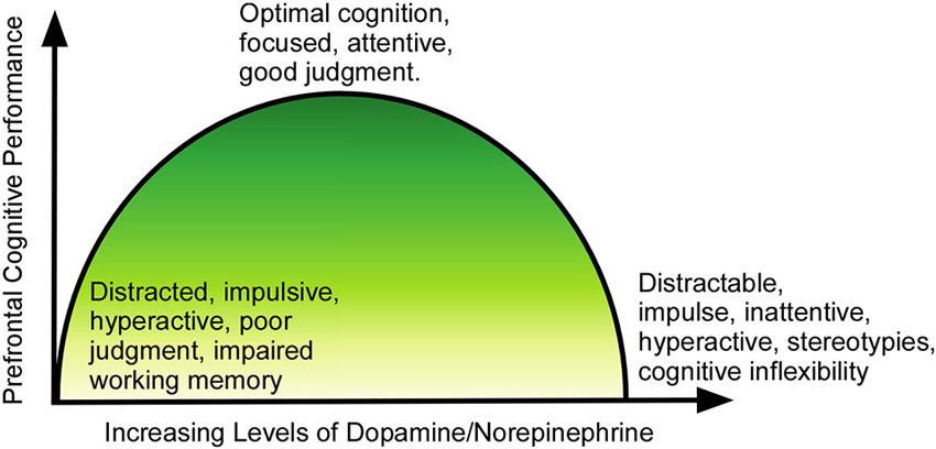 Adhd Drugs Increase Brain Glutamate >> Frontiers Performance Enhancement At The Cost Of Potential Brain