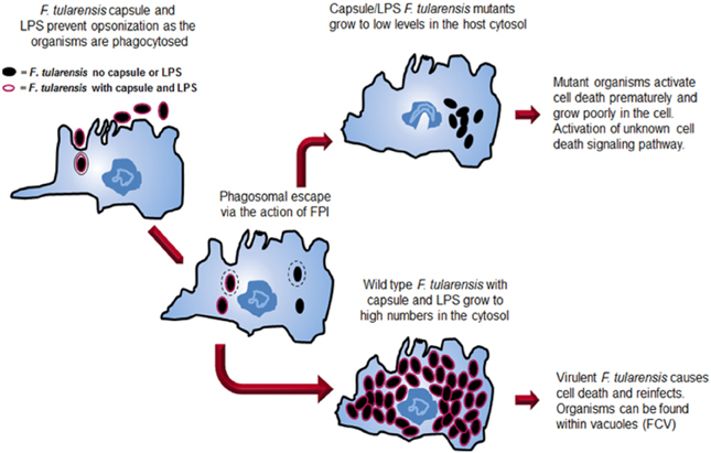 an analysis of the topic of the factors of parasitic virulence